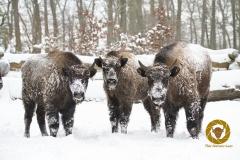 Winter im Wisentgehege Springe