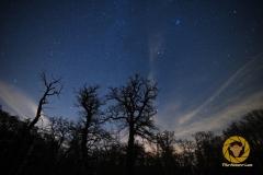 Nachts im WIsentgehege Springe