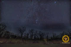 Im Zentrum Orion über den Pferden im Wisentgehege