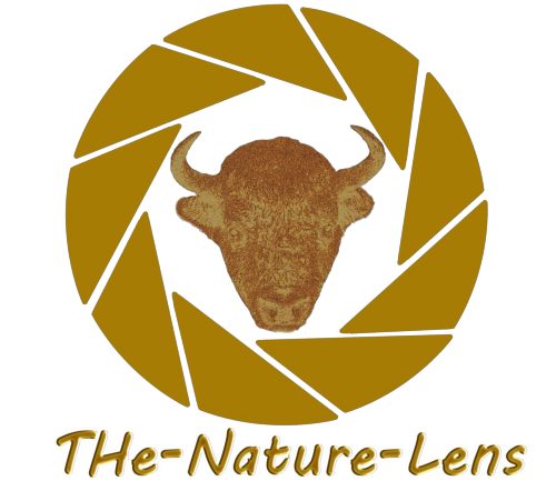 THe-Nature-Lens